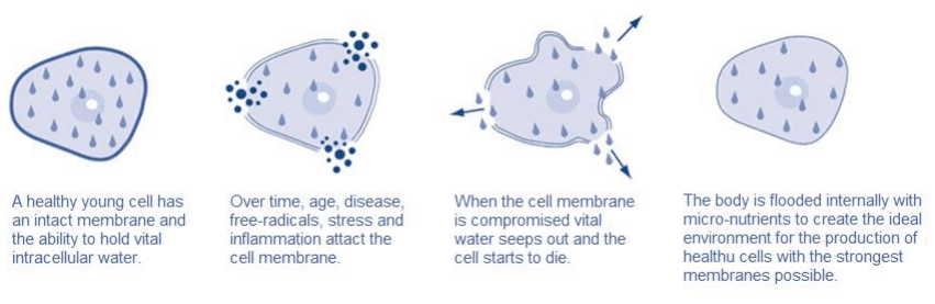 cellular-water-principe